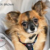 Adopt A Pet :: Buster Brown - Shawnee Mission, KS