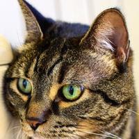 Adopt A Pet :: Tilley - Ponderay, ID