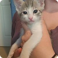 Adopt A Pet :: Persephone - Mission Viejo, CA