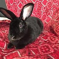 Adopt A Pet :: Damien - Tampa, FL