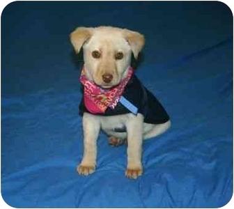 Golden Retriever/Labrador Retriever Mix Dog for adoption in Muldrow, Oklahoma - Tina