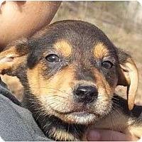 Adopt A Pet :: Dilly - Plainfield, CT