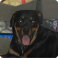 Adopt A Pet :: Tasha ADOPTED!! - Antioch, IL