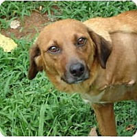 Adopt A Pet :: Corona  (amputee) - Plainfield, CT