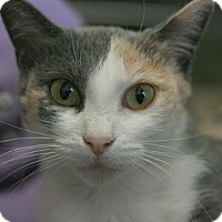 Adopt A Pet :: Tigress - Canoga Park, CA