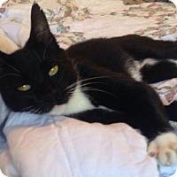 Adopt A Pet :: Abigaile - McDonough, GA