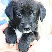 Adopt A Pet :: Martha - Roanoke, VA