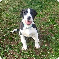 Adopt A Pet :: Juney - Morgantown, WV