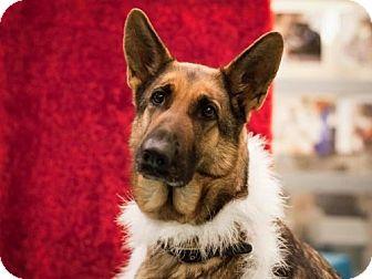 German Shepherd Dog Mix Dog for adoption in Dallas, Texas - Roxy