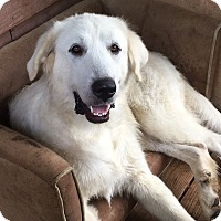 Adopt A Pet :: Stella - Hagerstown, MD