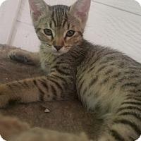 Adopt A Pet :: Church - North Highlands, CA