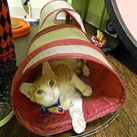 Adopt A Pet :: Beta - The Colony, TX
