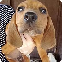 Adopt A Pet :: Philip - Gainesville, FL