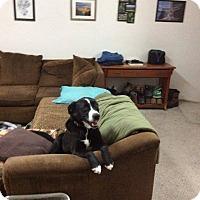 Adopt A Pet :: Ralph - Meridian, ID