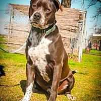 Adopt A Pet :: Buddy - Lemoore, CA