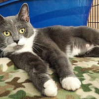 Adopt A Pet :: Eveleanna - Coshocton, OH