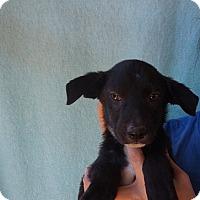 Adopt A Pet :: Nissan - Oviedo, FL