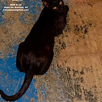 Adopt A Pet :: Dinah - Marlboro, NJ
