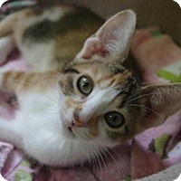 Adopt A Pet :: Bixby - Parker Ford, PA