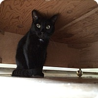 Adopt A Pet :: Jaguar - Middletown, NY