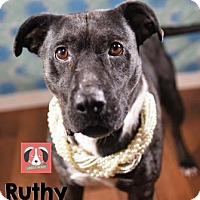 Adopt A Pet :: Ruthy - Lonely Heart - Gulfport, MS