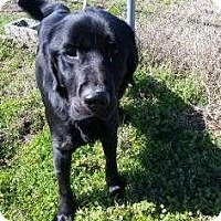 Adopt A Pet :: JC - Cleveland, MS