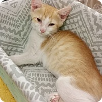 Adopt A Pet :: Praline - Hallandale, FL