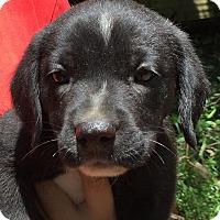 Adopt A Pet :: Mich#5F - Orlando, FL