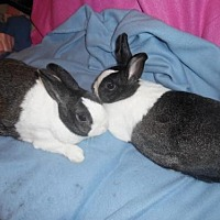 Dutch for adoption in Newport, Kentucky - ELVIS and PRISCILLA