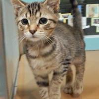 Adopt A Pet :: Kiva D - Vienna, OH
