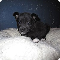Adopt A Pet :: Emilee - Westbank, BC