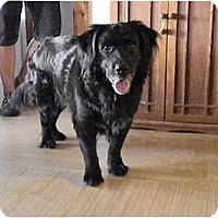 Adopt A Pet :: Buddy - Dundee, FL