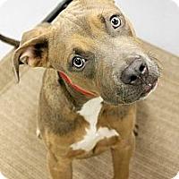 Adopt A Pet :: Tiny - Phoenix, AZ