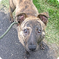 Adopt A Pet :: # 123-14  @ Animal Shelter - Zanesville, OH