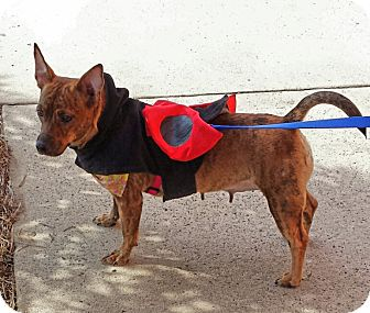 Terrier (Unknown Type, Small) Mix Dog for adoption in Alexis, North Carolina - Jolie