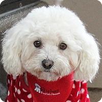Adopt A Pet :: Snowy - La Costa, CA