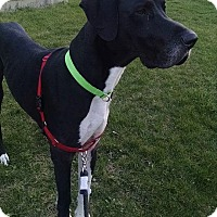 Adopt A Pet :: Thor - Springfield, IL