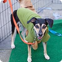Adopt A Pet :: Lia - San Francisco, CA