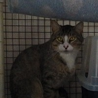 Adopt A Pet :: Jackson - Speedway, IN