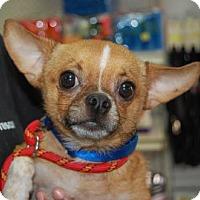Adopt A Pet :: Jazzy - Brooklyn, NY