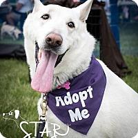 Adopt A Pet :: Heidi - ADOPTION PENDING - Northville, MI