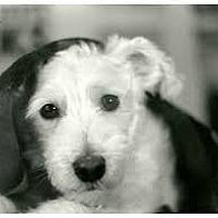 Adopt A Pet :: Sir EltonJohn - Aqua Dulce, CA