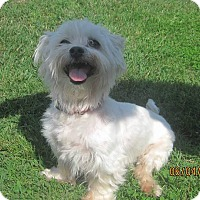 Adopt A Pet :: Tiger - Greensboro, MD
