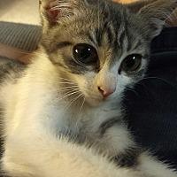 Adopt A Pet :: Sweets - La puente, CA