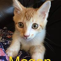 Adopt A Pet :: Megan - Covington, KY