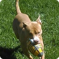 Adopt A Pet :: Reggie - Lorain, OH