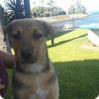 Adopt A Pet :: Dee - Harbor City, CA