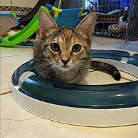 Adopt A Pet :: Olivia - Middletown, NY