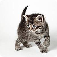 Adopt A Pet :: Sam - Rockaway, NJ