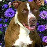 Adopt A Pet :: Ruby cute - Sacramento, CA